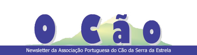 Newsletter O Cão